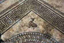 Pato retratado no antigo mosaico. Foto: Inrap