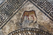 Uma espécie de Cervo também está entre os animais silvestres retratados. Foto: Inrap